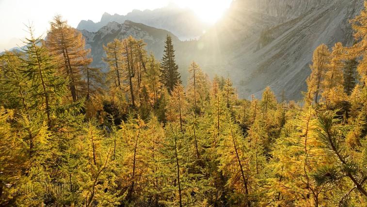 Ideja za izlet: Slemenova špica in zlati macesni (foto: Borut Birsa)