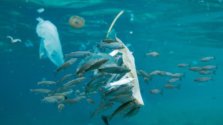 Zakaj so plastične vrečke škodljive za vaše zdravje (foto: profimedia)