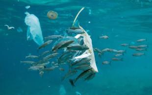Zakaj so plastične vrečke škodljive za vaše zdravje