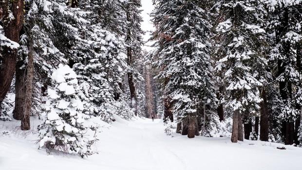 Kako nam lahko pomaga sprehod po gozdu (foto: unsplash)