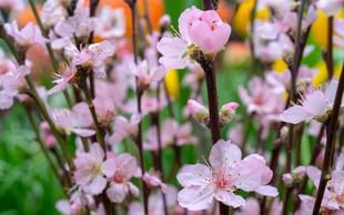 Japonski vrtovi