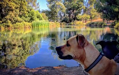 Psi imajo pozitiven učinek na zdravje lastnikov