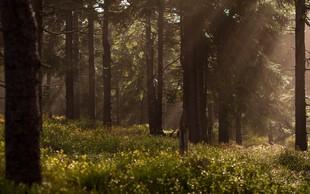 Lekcija, ki se je lahko naučite v gozdu