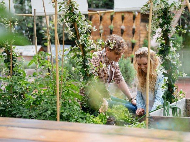 Sadje in zelenjava z domačega vrta sta najboljša - Foto: Profimedia
