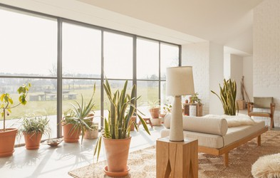 Zato so sobne rastline nujen dodatek k vsakemu domu