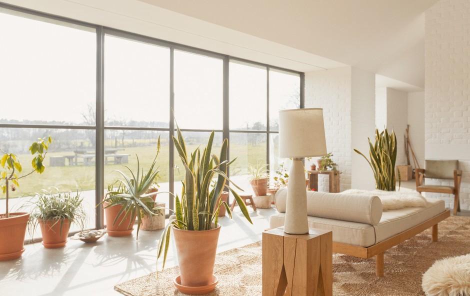 Zato so sobne rastline nujen dodatek k vsakemu domu (foto: profimedia)