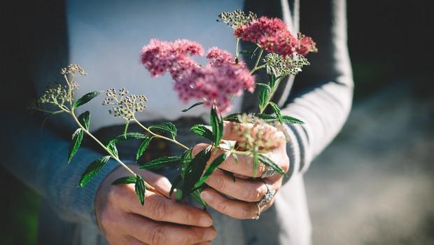 Prinesi mi rože, ki divje cvetijo (foto: unsplash)