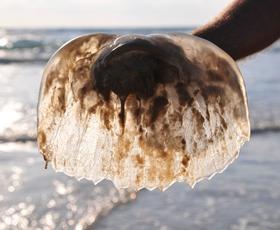 Veste, katere morske živali na Jadranu so nevarne?