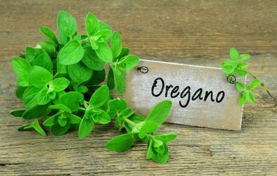 Origano – aromatična začimba z bogatimi zdravilnimi učinki