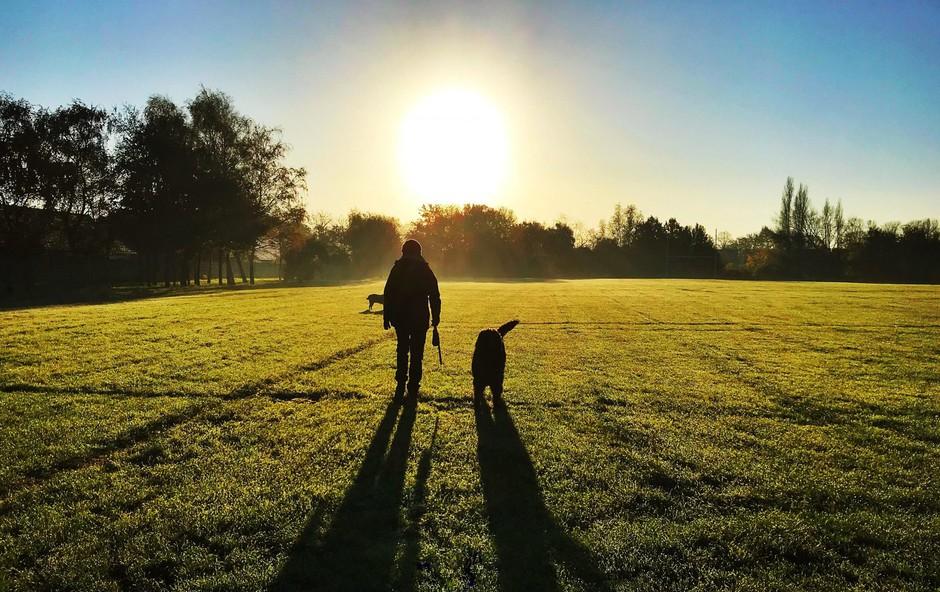 Kaj bi se zgodilo, če bi vsako jutro začeli s sprehodom? (foto: profimedia)