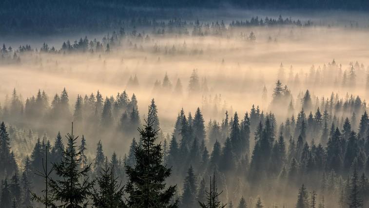 Ideja za izlet: med krošnje na Pohorje (foto: profimedia)
