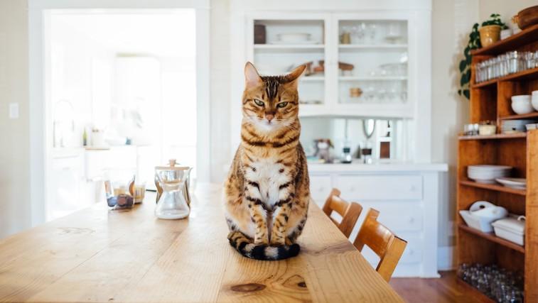 6 pozitivnih učinkov življenja z mačko (foto: unsplash)