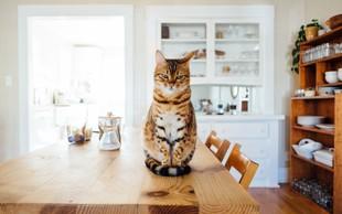 6 pozitivnih učinkov življenja z mačko