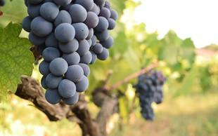 Spoznajte zdravilne lastnosti grozdja in preizkusite recept - piščanec z grozdjem