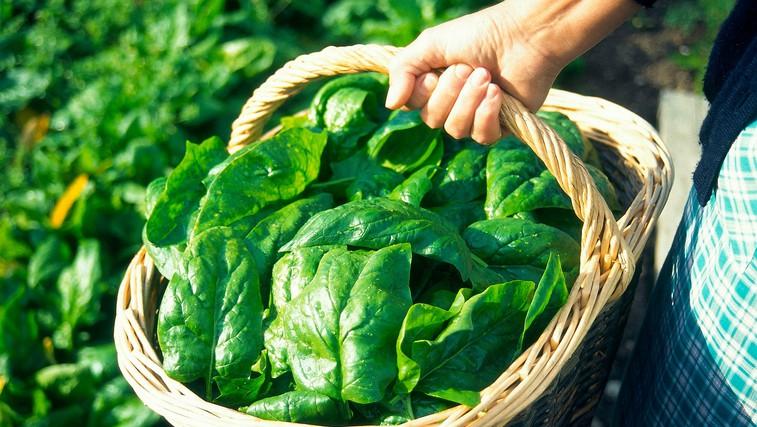 Dobrodejne lastnosti špinače, ki jih morate poznati (+ slasten recept) (foto: Profimedia)
