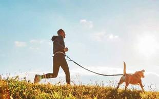 Vse, kar morate vedeti o teku v pasji družbi