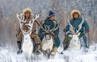 Pleme, ki jezdi severne jelene