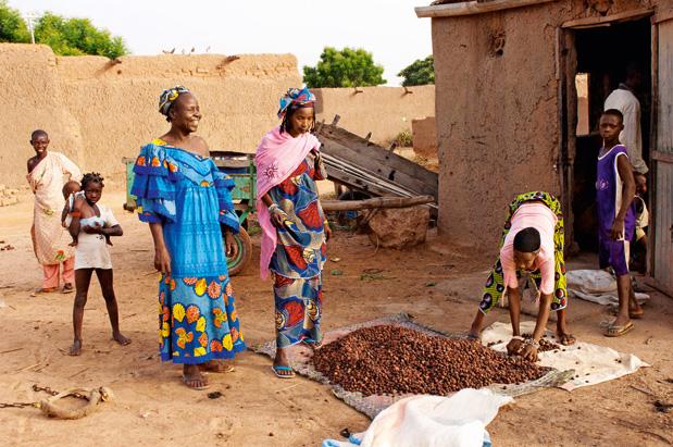Proizvodnja karitijevega masla v Afriki